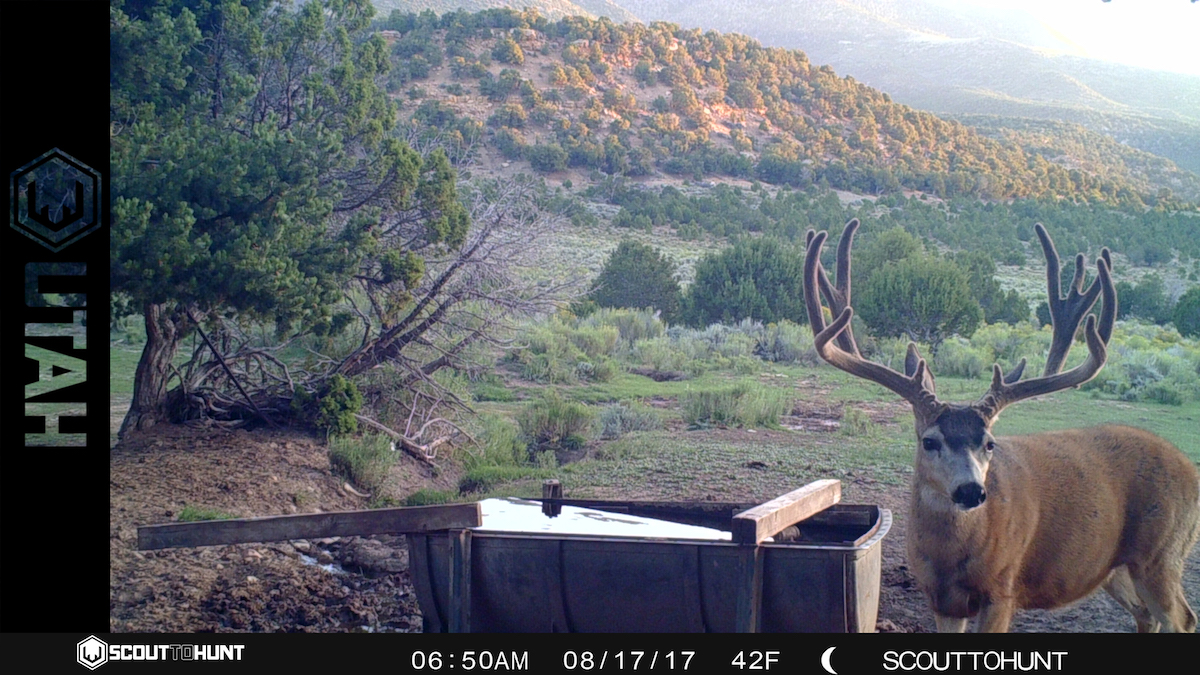 Utah Muledeer